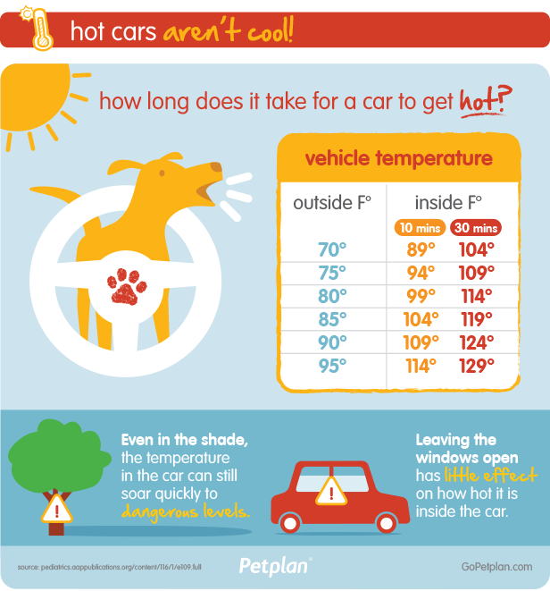 Hot Cars Are Dangerous For Pets | Infographic from Petplan Pet Insurance